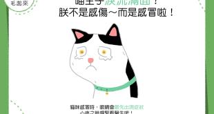 【貓貓康健】貓貓怎麼淚流滿面?貓不是感傷~而是感冒啦!