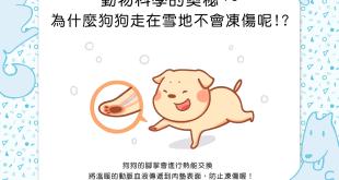特異功能?!為什麼狗狗走在雪地不會凍傷呢?