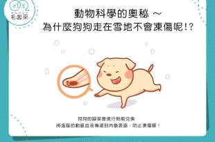 【汪汪冷知識】特異功能?!為什麼狗狗走在雪地不會凍傷呢?
