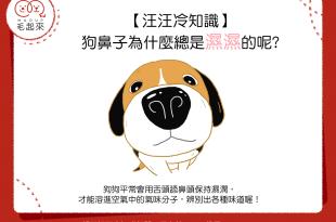 【汪汪冷知識】狗鼻子為什麼總是濕濕的呢?