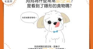 【汪汪行為學】狗狗為什麼常常舔空氣?是看到了隱形的食物嗎?