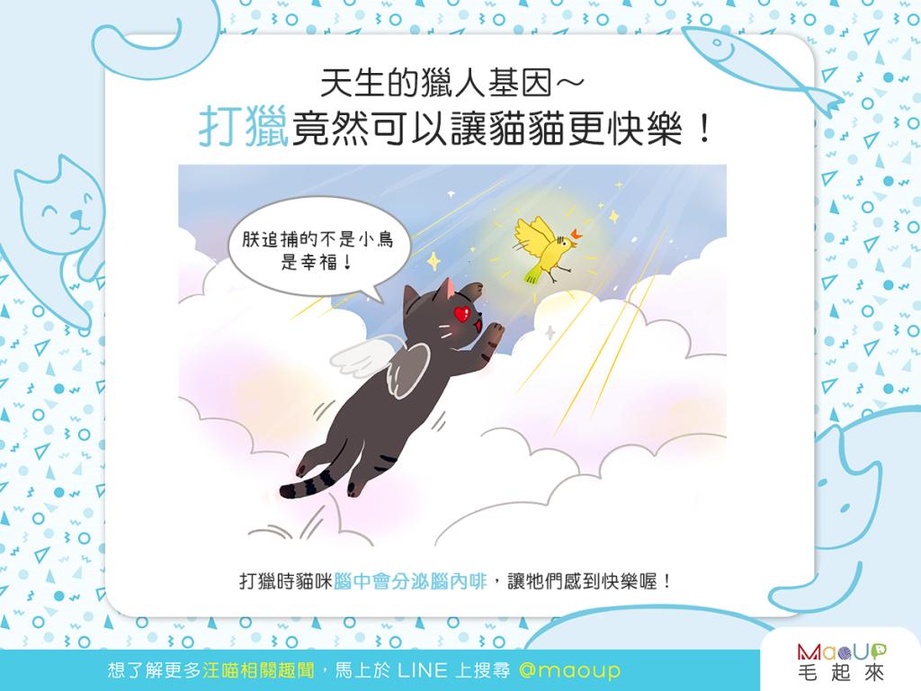 【貓貓真心話】天生的獵人基因~打獵竟然可以讓貓貓更快樂!