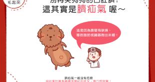 【汪汪康健】別再笑狗狗的凸肚臍!這其實是臍疝氣喔~