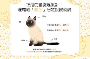 【喵喵冷知識】暹羅貓的重點色是怎麼來的!?