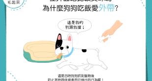 【汪汪行為學】「外帶」更美味?為什麼狗狗不愛在碗裡吃飯?