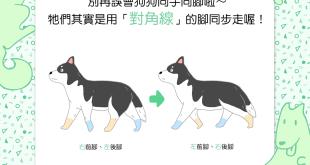 【汪汪冷知識】別再誤會狗狗同手同腳啦~牠們其實是用「對角線」的腳同步走喔!