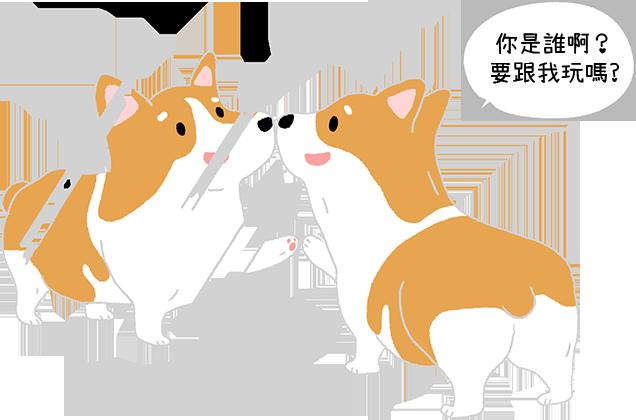 魔鏡啊魔鏡~狗狗認得出鏡子裡的自己嗎?