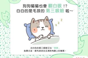【汪喵康健】狗狗貓貓也會 翻白眼 !?白白的是毛孩的 第三眼瞼啦~