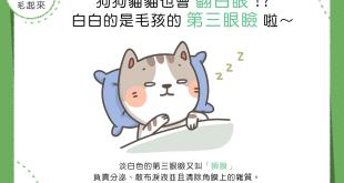 【汪喵康健】狗狗貓貓也會翻白眼!?白白的是毛孩的「第三眼瞼」啦~