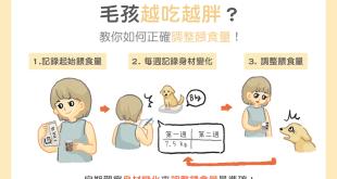 家中狗狗貓咪越吃越胖?3步驟教你如何正確調整餵食量!