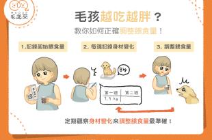【汪喵餵養知識】家中毛孩越吃越胖?3步驟教你正確調整餵食量!