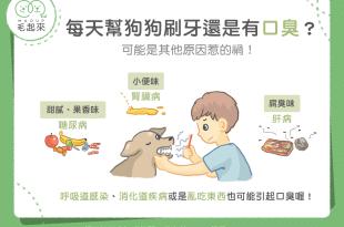 【汪汪康健】每天幫狗狗刷牙還是有口臭?可能是其他原因惹的禍!