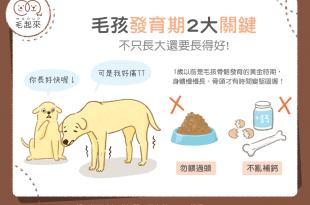 【汪喵餵養知識】什麼?長太快也不行?把握貓狗發育期的2大關鍵!