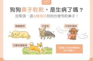 狗狗鼻子變乾是生病了嗎?怎麼辦?別緊張,有時乾鼻子是很正常的!