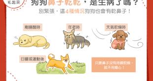 【汪汪康健】狗狗鼻子變乾了,怎麼辦?別緊張,有時乾鼻子是很正常的!