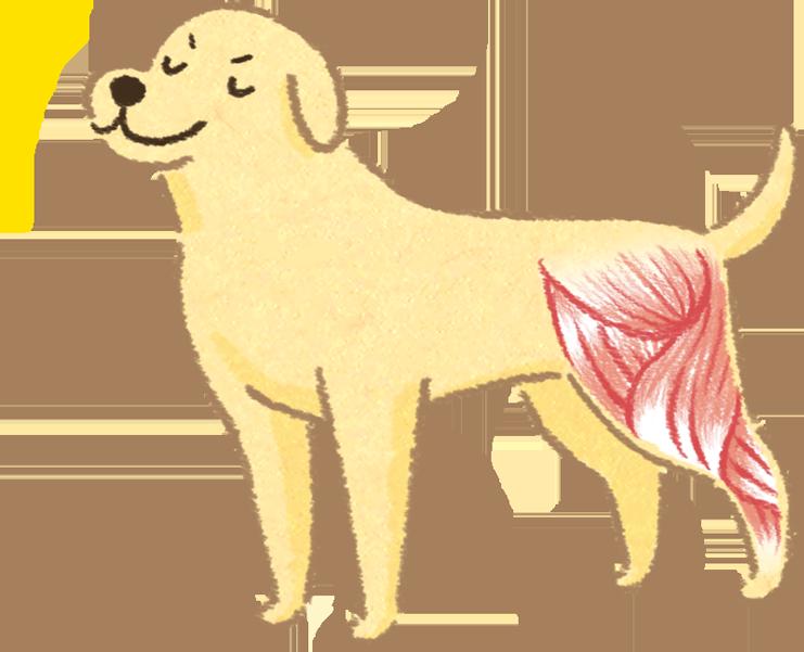 狗狗貓咪關節痛痛,都不運動?避免肌肉流失才能保護關節!