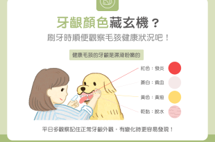 貓狗的牙齦顏色跟健康狀況有關?刷牙時順便做個檢查吧!