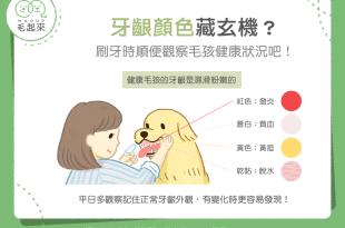 【汪喵康健】貓狗的牙齦顏色跟健康狀況有關?刷牙時順便做個檢查吧!