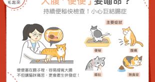 【喵喵康健】貓咪便秘不可輕忽!認識巨結腸症