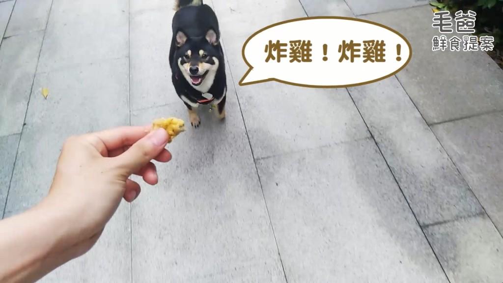 毛爸鮮食提案狗狗貓咪也能吃炸雞健康氣炸黃金唐揚雞