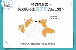 【汪汪冷知識】魔鏡啊魔鏡~狗狗認得出鏡子裡的自己嗎?