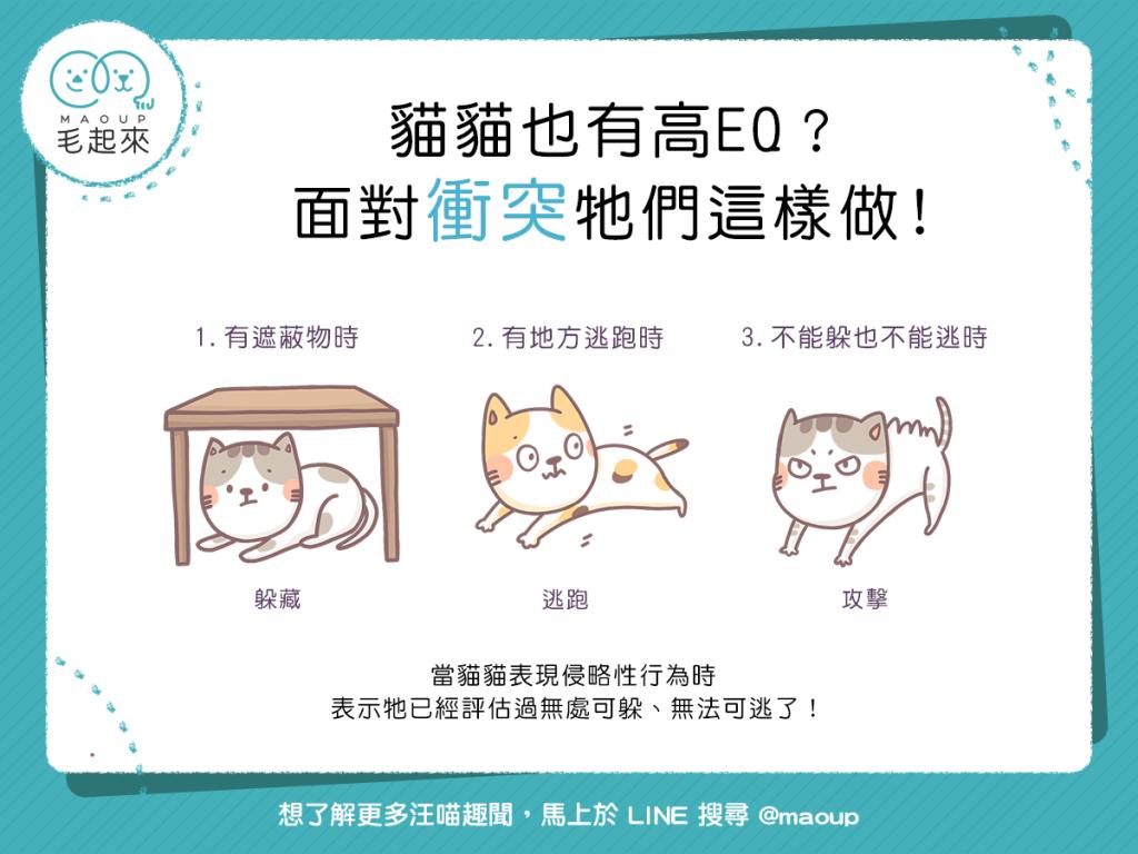 【喵喵行為學】貓貓也有高EQ ?面對衝突牠們這樣做!