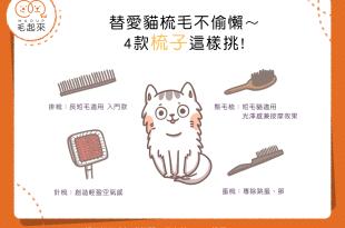 【喵喵小學堂】替愛貓梳毛不偷懶~4款梳子這樣挑!