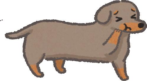 6種要特別注意牙周病咬合不正口腔問題的狗狗喜樂蒂辣腸拳師吉娃娃約克夏巴哥鬥牛