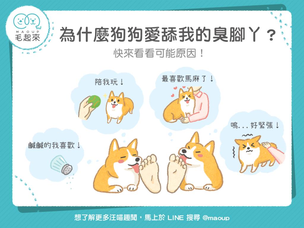 【汪汪行為學】為什麼狗狗愛舔我的臭腳丫?原來是有原因的!