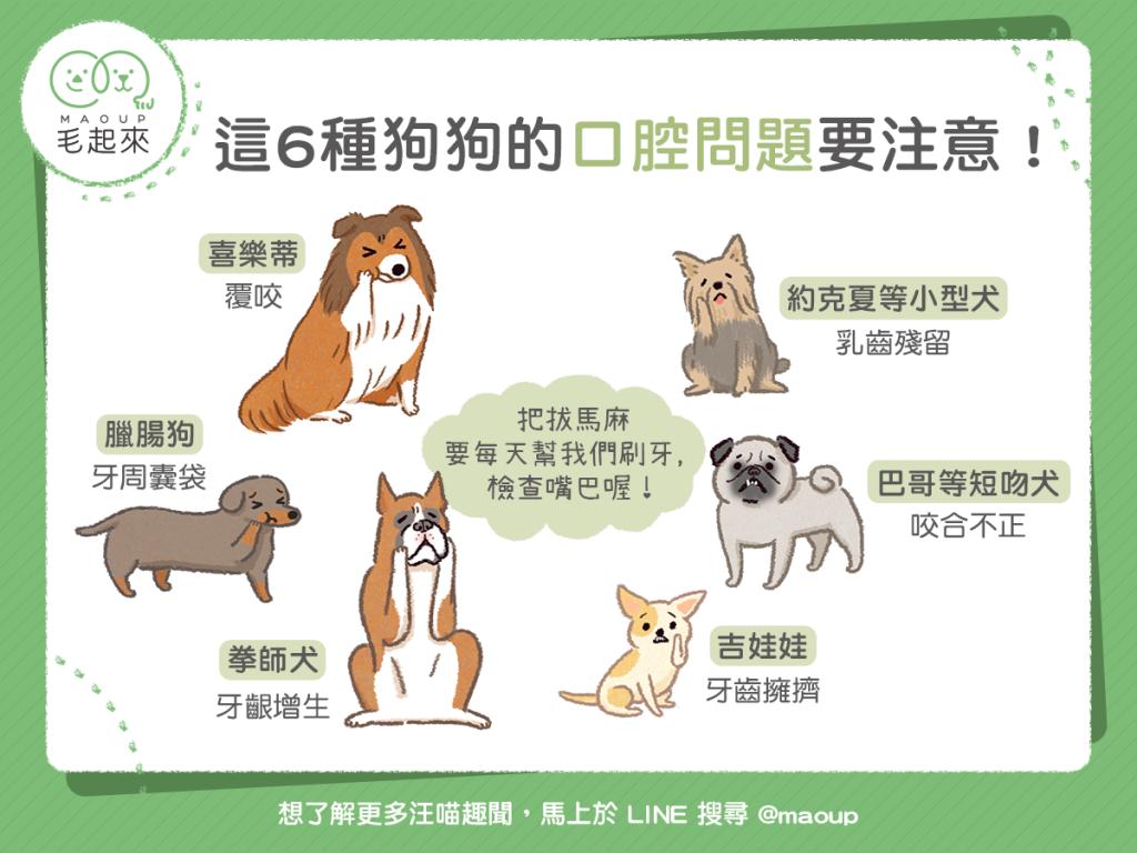 【汪汪康健】6種要特別注意口腔問題的狗狗!
