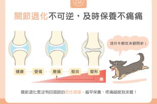 狗狗貓咪關節退化無法恢復提早保養才不痛