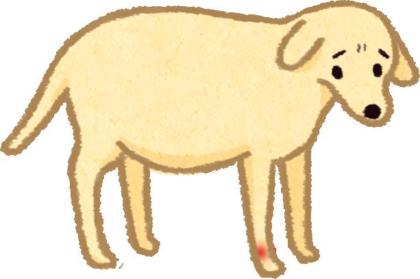 狗狗貓咪關節炎是個惡性循環,別讓關節退化像滾雪球越滾越大越嚴重