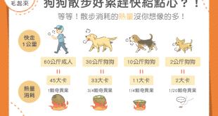 【汪汪康健】狗狗每天散步運動,為什麼體重還是直線上升?