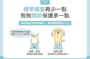 寵物貓狗肥胖問題關節炎標準體重怎麼算量體重