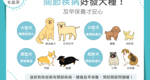 【汪汪康健】關節保養要趁早!這四種狗狗要注意!