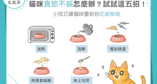 【MaoUP 吃健康】貓咪食慾不振? 五招重拾吃飯樂趣!