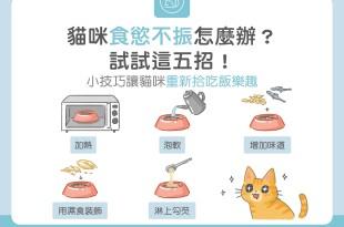 貓咪食慾不振怎麼辦?試試這五招!