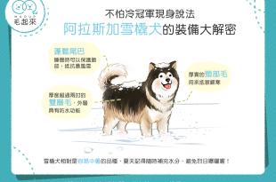 【汪汪小學堂】雪地中的行動暖爐,3個阿拉斯加犬耐寒大法寶!