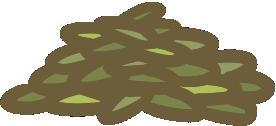 新鮮貓草1