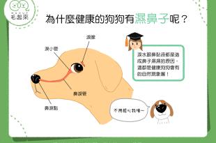 為什麼健康的狗狗有濕鼻子呢?