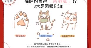 貓咪也會得香港腳?