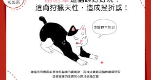 雷射筆逗貓