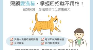 照顧愛滋貓,掌握四招就不用怕