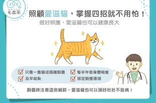 四招照顧好愛滋貓