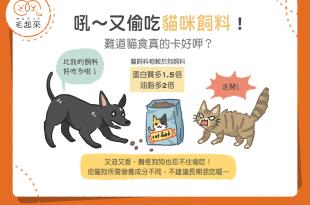 又偷吃貓咪飼料?!難道貓食真的比較好吃?