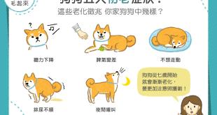狗狗五大初老症狀