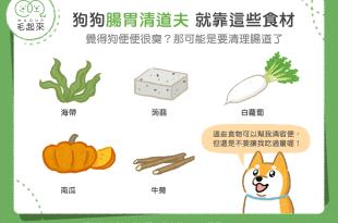 覺得狗便便很臭? 那可能是要清理腸道了。狗狗腸胃清道夫就靠這些食材