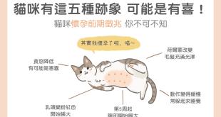 貓咪有這五種跡象,可能是有喜/懷孕了!