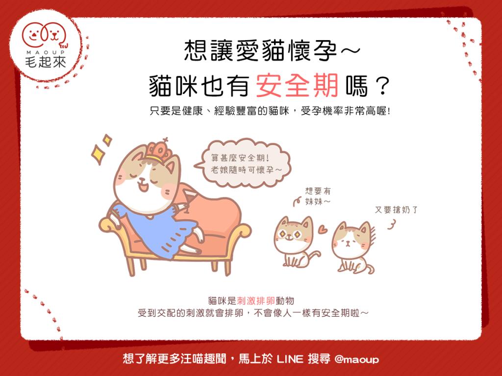 【喵喵小學堂】想讓愛貓懷孕~貓咪也有 安全期 嗎?