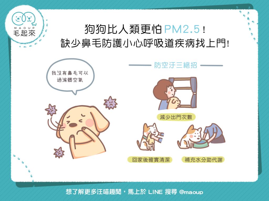 【日常危險】狗狗比人類更怕 PM2.5 !缺少鼻毛防護小心呼吸道疾病找上門!